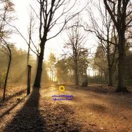 Apley Woods Sunrise